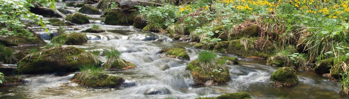 An wilden Wassern wandern