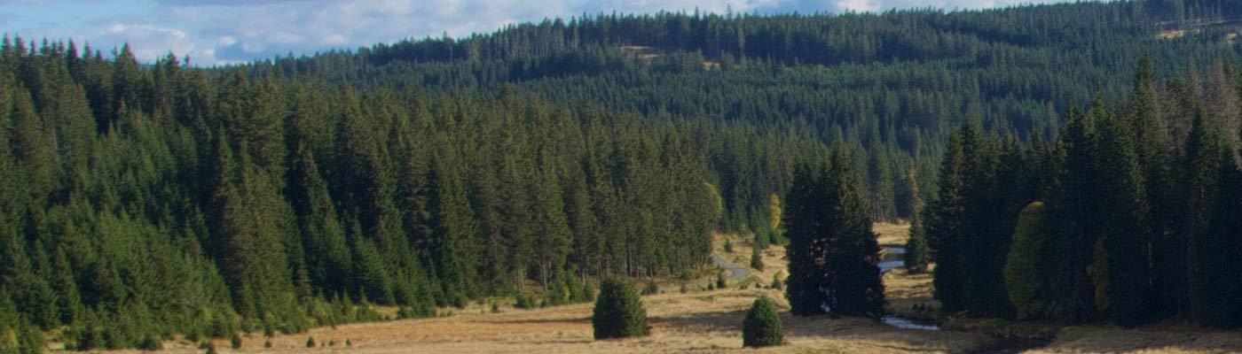 Durch Böhmens Wälder und Fluren